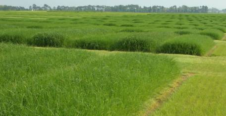 Pakistan, Australia scientists to team up in agri growth